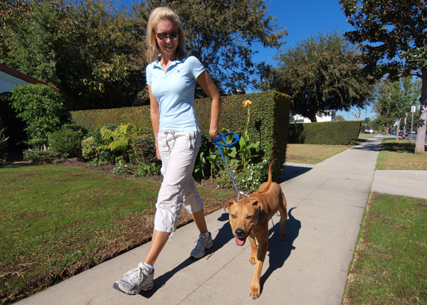 Top 5 Reasons to Hire a Dog Walker in Los Angeles