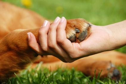 How do I choose a Dog Walker / Pet Sitter?