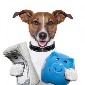 Cost to hire a dog walker or pet sitter